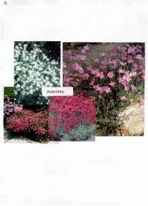 Perennials-11