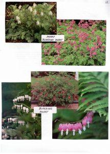 Perennials-12