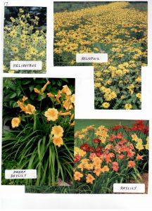 Perennials-17