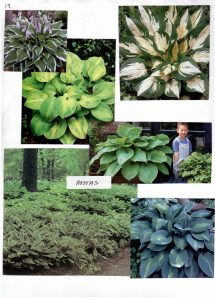 Perennials-19
