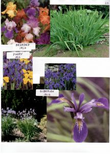 Perennials-20