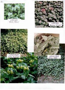 Perennials-21