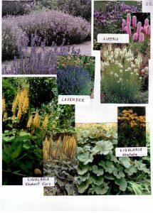 Perennials-22