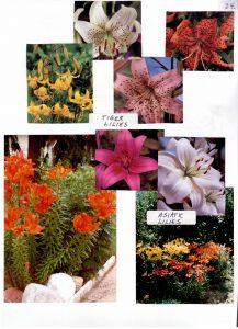Perennials-24