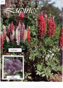Perennials-25