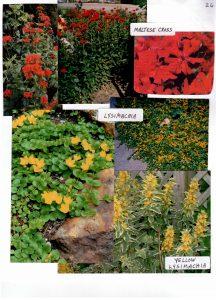 Perennials-26