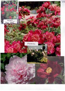Perennials-28