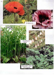 Perennials-31