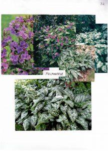 Perennials-32