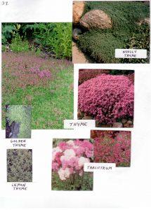Perennials-37