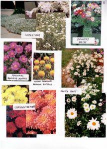 Perennials-8