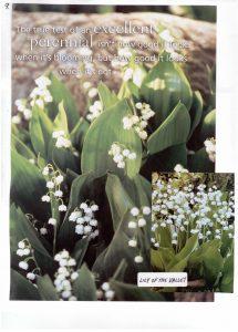 Perennials-9