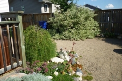 AFTER - Lawnless Back Yard
