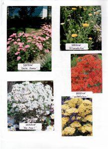 Perennials-1