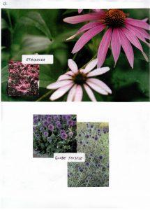 Perennials-13