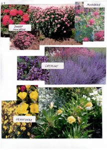 Perennials-27