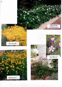 Perennials-3