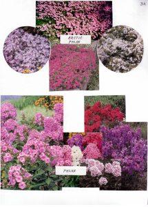 Perennials-30