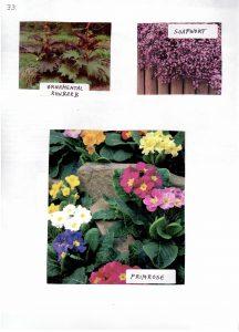 Perennials-33