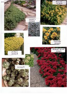 Perennials-35