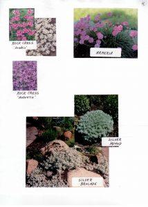 Perennials-4