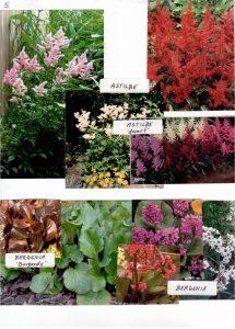 Perennials-5